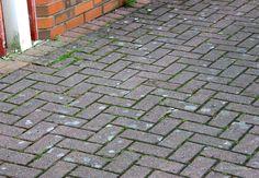 Aspicilia_contorta_pavement_PA150201.jpg (800×555)