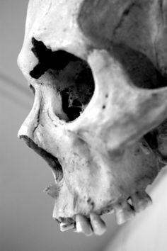 AnatoRef — Aspects of the Human Skull Top Image Row Left,. Skull Reference, Anatomy Reference, Skeleton Bones, Skull And Bones, Dragon Oriental, Totenkopf Tattoos, Tattoo Hals, Bild Tattoos, Statues