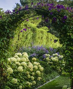 Ina Garten's garden...Annabelle Hydrangeas with vitex and Jackaminii clematis climb over arch