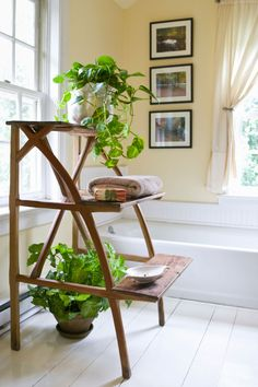 """""""Shower Plants"""" Are the Easiest Way to Keep Your Bathroom Clean"""