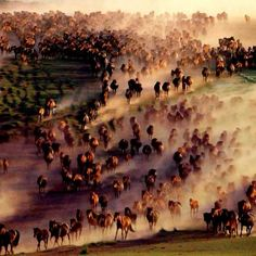 """""""The Horse can carry us to the Otherworld. Horse energy is energy of Mother Earth. The Horse passes through gateways in all dimensions."""" This picture is showing wild horses of Mongolia, Central Asia. Most Beautiful Animals, Beautiful Horses, Beautiful Scenery, Beautiful Landscapes, Mongolia, Cowboy Horse, Cowgirl Tuff, All About Horses, Majestic Horse"""