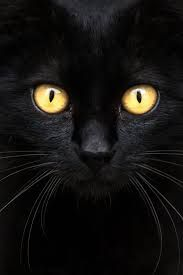 Image result for black cat face beautiful