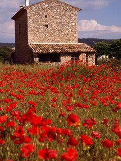 Poppies, Provence, France #wyoming #interiordesign #interiordesign