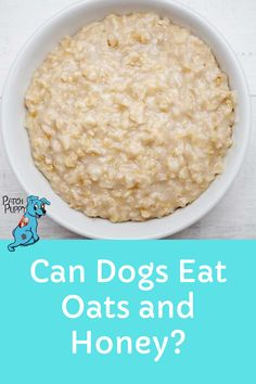 Can dogs eat oats and honey? Yes they can! But there are some things you should know first. Check out our post Can Dogs Eat Oats and Honey? to learn more. Diy Dog Treats, Dog Treat Recipes, Dog Food Recipes, Oats And Honey, Can Dogs Eat, Dog Eating, Dog Snacks, Health And Safety, Homemade