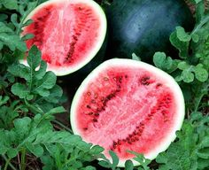 Top 10 Fruits You Can Grow in Containers