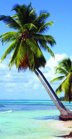 Los propietarios de Aria Puerto Cancún podrán disfrutar del Club de Playa de Puerto Cancún, donde tendrán las siguientes instalaciones:  Alberca de Adultos  Alberca de niños  Plataforma para practicar yoga  Restaurante  Baños, regaderas y lockers  Informes:  Elisa Ramos    eramos60@gmail.com   Tel (998)1685141 http://ariapuertocancun.net #ventas #realestate #cancun #realtor #luxury #new