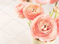 Ad: Beautiful pink ranunculus bouquet by Life Morning Photography on Beautiful pink ranunculus bouquet. Holiday elegant bunch of flowers. Morning Photography, Color Photography, Ranunculus Bouquet, Still Life Photographers, Business Illustration, Bunch Of Flowers, Holiday Photos, Business Card Logo, Floral Design