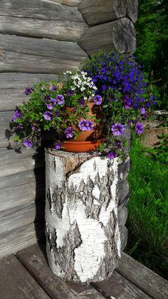Kukkapurkki kannon päässä.  #kukat  #flowers