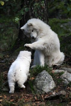 And this Samoyed is showing his support by petting his son after a job well done. | 21 Pictures That Will Restore Your Faith In Love