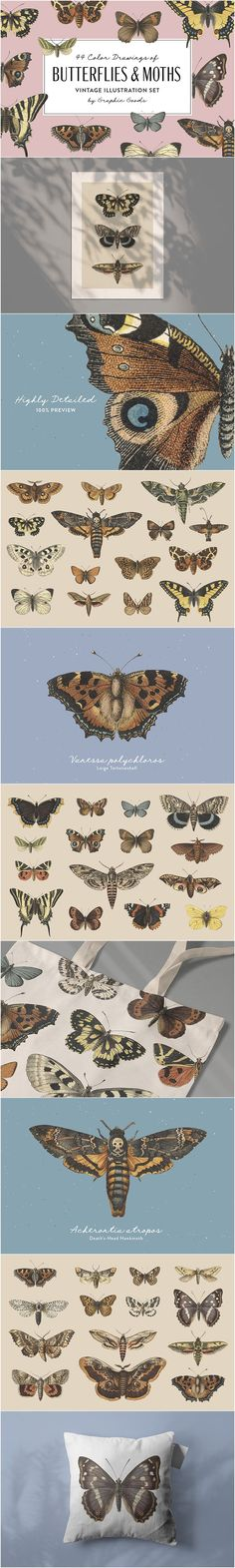 A collection of beautiful color illustrations of butterflies and moths restored from books. This set contains 44 transparent hi-res PNG images Leopard Moth, Tiger Moth, Retro Logos, Apparel Design, Graphic Illustration, Woodland, Butterflies, Graphics, Graphic Design