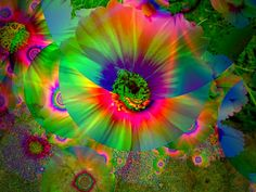 the rainbow flowers seemed even more beautiful than when i was a child although then..they were destroyed..............................