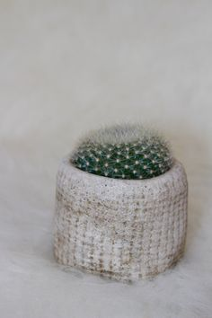 Cactus's can be very inspiring with texture. Long or short, dark or light, thin or wide, pointy or flat, Cactus's come in such a wide variety.