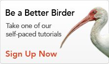 A self-paced online tutorial. Learn to ID birds by size and shape