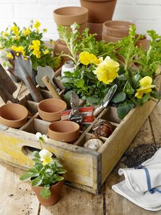 No more trips back and forth to the garden shed. With its dividers still intact, this rustic soda crate is ideal for toting around supplies, like 1 3/4-inch terra-cotta pots, bulbs, seed packets, and clippers.