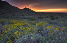 Twilight Desert Spring by Sue Cullumber on Capture My Arizona // San Tan Mountains along the Dynamite Trail at dusk.