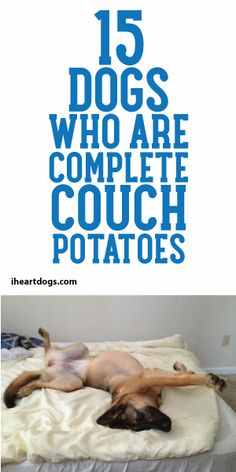 15 Dogs Who Are Complete Couch Potatoes! :)