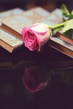 livro + rosa