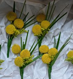 Craspedia , astrantia and rosemary buttonholes. Early Spring Wedding, February Wedding, Autumn Wedding, Summer Wedding, Wedding Show, Our Wedding, Wedding Ideas, Corsage For Men, Flowers For You