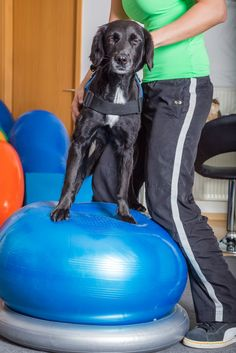 Ever wondered what kinds of rehab therapy exist for pets? These methods could help your pet heal quicker!