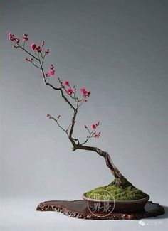 bonsai #japanesegardening. #bonsai #interior_decor #home_decor