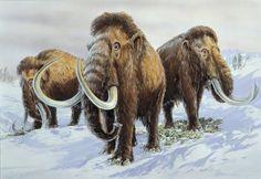Mammoth genomes provide recipe for creating Arctic elephants
