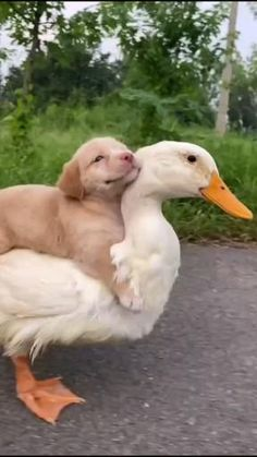 Baby Animals Super Cute, Cute Little Animals, Cute Funny Animals, Funny Dogs, Cute Cats, Cute Animal Videos, Funny Animal Pictures, Unusual Animals, Animals Beautiful