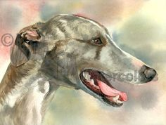 Cool Whippet is an Open Edition Giclee Art Print from a watercolor featuring a Whippet dog. The Whippet is a medium-sized sight hound and is physically similar to a small greyhound. Sometimes called a Greyhound in Miniature, they are active and playful but generally quiet and gentle dogs. This cuddly canine is quite content warming his masters feet in bed at night. He makes a wonderful furry hot water bottle!  This art print is created on archival paper and looks and feels like the original…