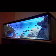 One of our favorite Tanganyika - Tropheus tanks decorated with a room divider (F) models . Fish Aquarium Decorations, Aquarium Setup, Home Aquarium, Aquarium Design, Marine Aquarium, Tropical Fish Aquarium, Freshwater Aquarium Fish, Aquarium Fish Tank, Tropical Fish Tanks