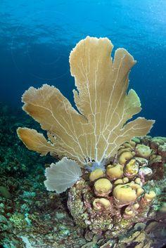 BAR- Underwater Animals, Underwater Creatures, Underwater Life, Ocean Creatures, Sea Plants, Beautiful Sea Creatures, Ocean Pictures, Under The Ocean, Ocean Scenes