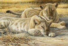 lion cubs heat of the day by Jeremy Paul