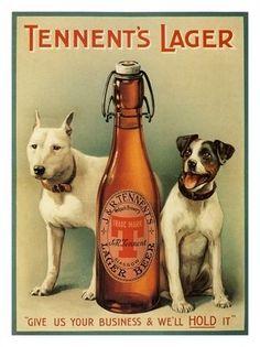 AP1511 - Tennents Lager, Vintage Beer Advert, 1909