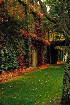 Autumn Ivy, Dublin, Ireland photo via aldora Beautiful World, Beautiful Places, Beautiful Pictures, The Places Youll Go, Places To Go, Magic Places, Ivy Wall, Image Nature, Iphone Wallpaper Fall