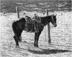 Pencil Artist Dino Cornay - Archives - Pencil Artwork - Cowboy's Pride