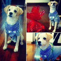Bongo estuvo visitando nuestras instalaciones y recibió su ancheta de premios en la categoría mascota disfrazada