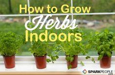 How to Start an Indoor Herb Garden via @SparkPeople