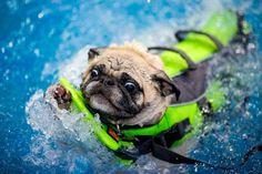 """Swim, they said. It will be fun, they said."""