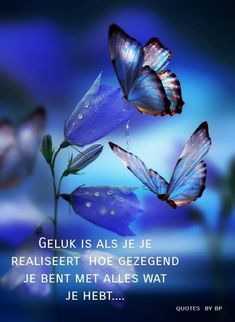 Geluk....tevredenheid. ...L.Loe Comfort Quotes, Quran Verses, Cute Wallpaper Backgrounds, Butterfly Art, Thoughts And Feelings, Tatty Teddy, Background S, Heaven On Earth, Beautiful Butterflies