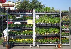 Gardening Tips: Urban gardening. #gardening