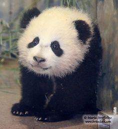 Baby Bao Bao!  She is truly precious!