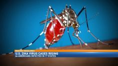 http://wwmt.com/news/health/cdc-expects-zika-transmission-via-mosquitos-in-us