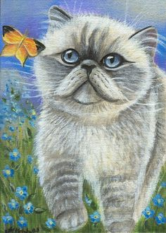 Persian cat with butterfly by MARTA