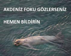 SAD-AFAG | Akdeniz fokunu korumak Akdeniz'i korumaktır…