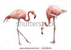 flamingo watercolor - Google Search