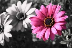 Image detail for -Selective Color Photography For Inspiration | Funny Moments, Humor ...