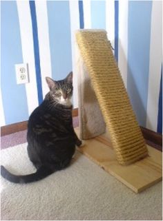 DIY Cat Scratch Post, looks simple and not such an eyesore!