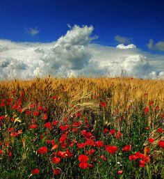 Summer fragrance ... - by Edmondo Senatore