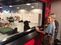 Tailwaggers - Dog Daycare - Dog Training - Dog Grooming - Dog ...