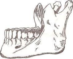 Cannibal Dreams /// anatomy study no. 1