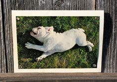 Bulldog in Grass Blank Note Card Animal Photography by HBBeanstalk, $3.00