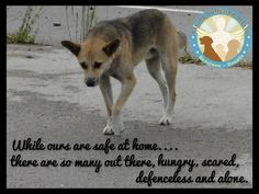#DONATE #ADOPT #FOSTER #HELP #DOGS #SAVE FROM HUNGER, FEAR & PAIN #bosniadogs @StraysSarajevo http://www.youcaring.com/pet-expenses/shelter-a-sarajevo-stray/289754 …
